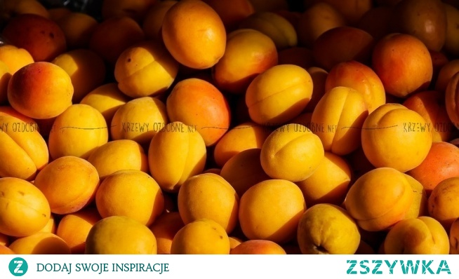 Morela Somo Prunus armeniaca Odmiana deserowa i przerobowa. Samopłodna – nie wymaga zapylaczy. Odporna na mróz. Owocuje co roku, dość obficie, w połowie sierpnia. Owoce są słodkie, aromatyczne o pomarańczowej barwie z jasnoczerwonym rumieńcem.