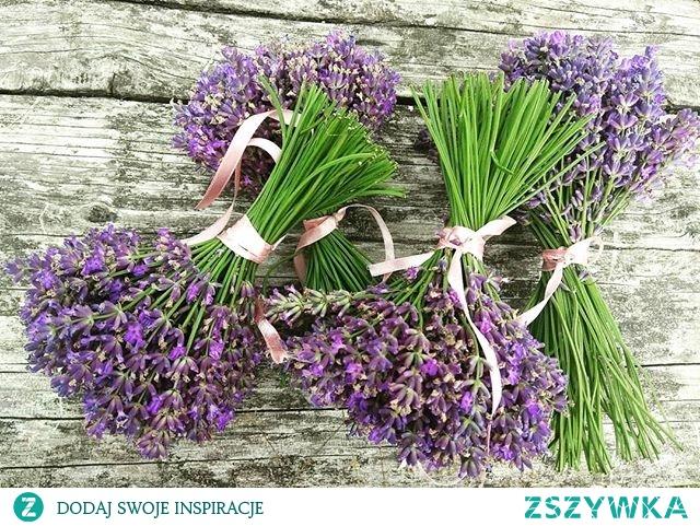 Lavendula angustifolia #lavender #lavenderlover #mygarden #hortiadvisor #gardener #gardening #flora #plantdesign #gardentips #gardenlovers #bestplants #lawenda #bukietlawendy #lavenderbouquet #flower #flowersdesign #plantslovers #gardeninspiration