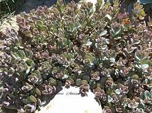 Ogrod skalny