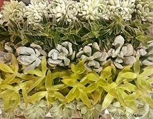 Sukulenty - rośliny o nietu...