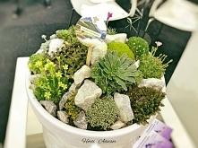 Mini garden rockery – a com...