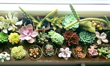 Mini collection of cacti an...