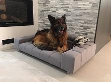 Sofa ta na pewno stanie się ulubionym miejscem do spania dla Twojego czworonoga.  Na szczególną uwagę w przypadku tego produktu zasługują wygodne podłokietniki, na których Twój ...