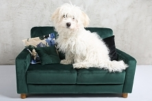 minisofa legowisko Tommy S dla psa velvet smaragd kanapa