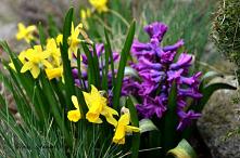 Ogród wiosną
