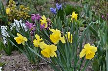 Ogród wiosną ...