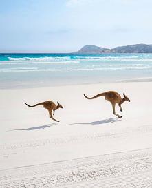 Australia-kangurowa plaża