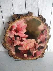 Obrazek kwiat jabłoni
