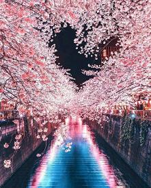 Krajobraz z Japonii, kwitną...
