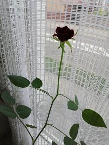 Moja kochana różyczka.... J...