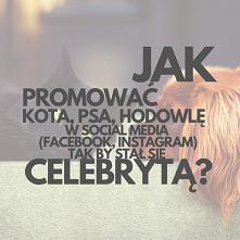 Jak Promować Kota, Psa, Hodowlę W Social Media (Facebook, Instagram) Tak By S...