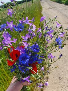 polne kwiaty :)