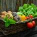 Internetowe sklepy spożywcze z dostawą do domu - szczegóły na blogu po kliknięciu w zdjęcie! W materiale o tym, jak zrobić zakupy z Biedronki online, gdzie zrobić zakupy z dostawą do domu i gdzie zamówić jedzenie w czasie pandemii!