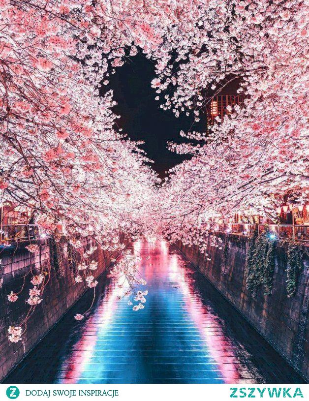 Krajobraz z Japonii, kwitnąca wiśnia ❤️