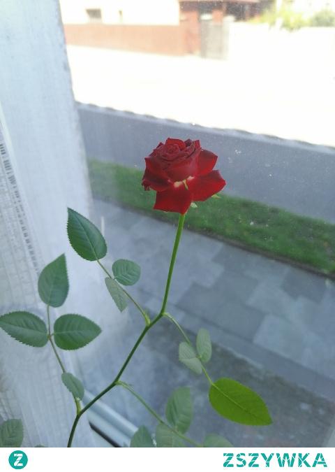 Jest cudowna... :*