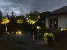 Mój ogród ..