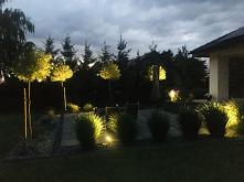 Mój ogród...
