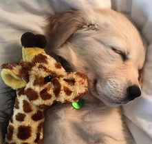 Sweet Dreams Pup