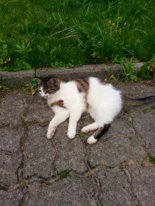 Tosia odpoczywa po polowaniu i posiłku ;-)