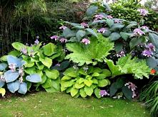 #ogród #cień