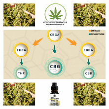 CBGa - naturalny środek na ...