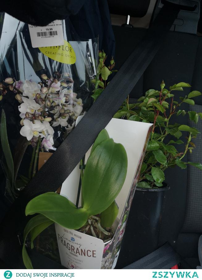 Tak ciężko ominąć sklepy ogrodnicze... :')))) B-)