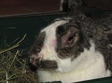 Leki dla królików hodowlanych zakupisz w naszym sklepie Vitalzam. Oferujemy profesjonalne produkty dla hodowców różnych zwierząt. Sprawdź!