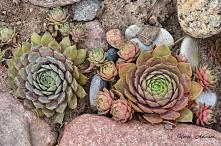 Ogród skalny by HORTI ADVIS...