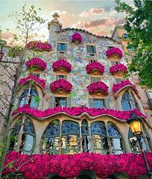 #Barcelona#kwiaty#