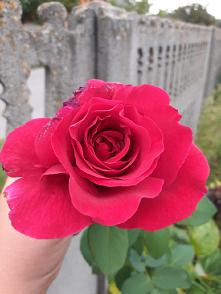 #przyroda#kwiat#