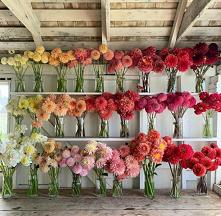 #kwiaty #kolorowekwiaty