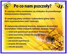 Po co nam pszczoły?