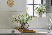 Rośliny do łazienki, jak zrobić las w słoiku? Sprawdź idealne rośliny!  Rośliny w łazience sprawiają, że można się w niej poczuć jeszcze bardziej zrelaksowanym. Wysoka wilgotnoś...