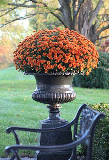 #kwiaty #jesiennie