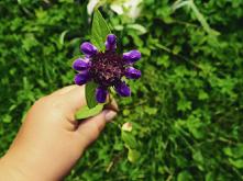 #ostatek wiosny#fiolet#łałała#