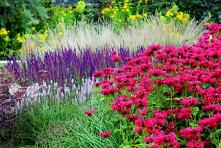 Ogrod preriowy