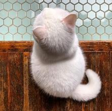 *.*#kotek #kuleczka