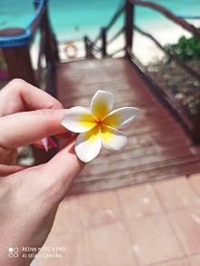 #Zanzibar #kwiatek
