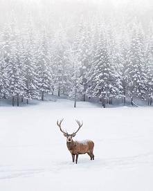 #zima#oby#zawitała