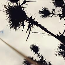 #jesien#oset#łąka#