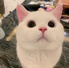 Cześć mamusiu #koty#kociaki