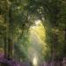 #leśna #ścieżka