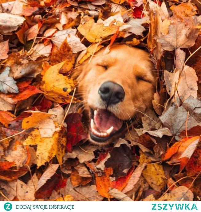 #dog #smile
