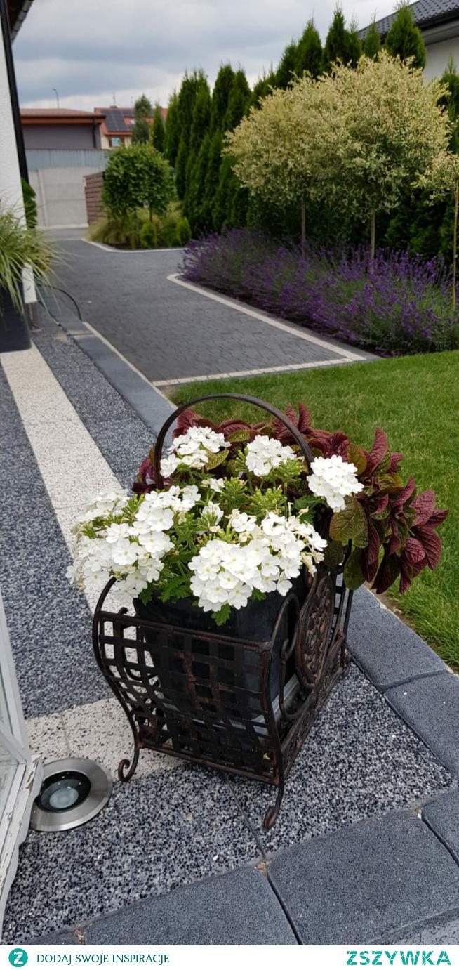 #ogród  #kwiaty
