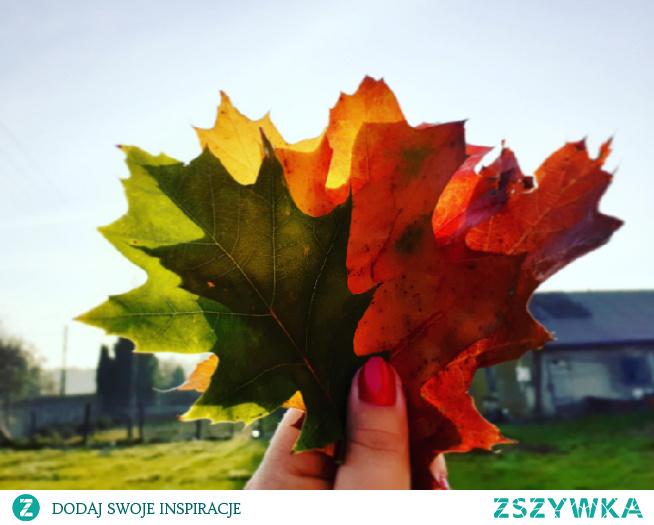 #liscie#jesien#kolory#