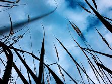 #trawa#niebo#pieknie jest#