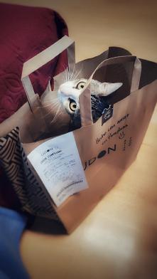 Kociak na wynos... Instagram: marysia2511 #sushi #kot #oczy