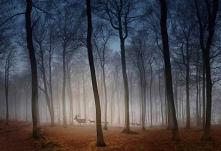 #natura #piękno