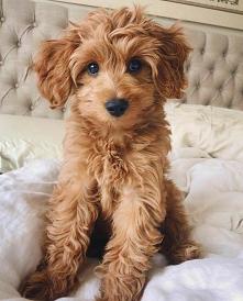 #pies #szczeniak