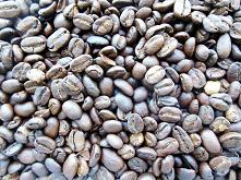 Kopi Luwak - najdroższa kaw...